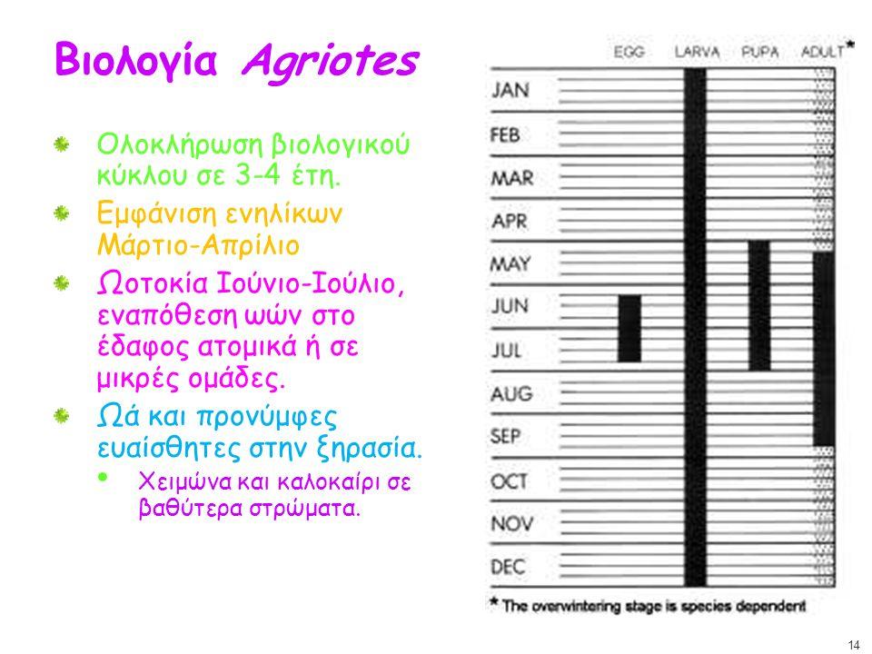 Βιολογία Agriotes Ολοκλήρωση βιολογικού κύκλου σε 3-4 έτη. Εμφάνιση ενηλίκων Μάρτιο-Απρίλιο Ωοτοκία Ιούνιο-Ιούλιο, εναπόθεση ωών στο έδαφος ατομικά ή