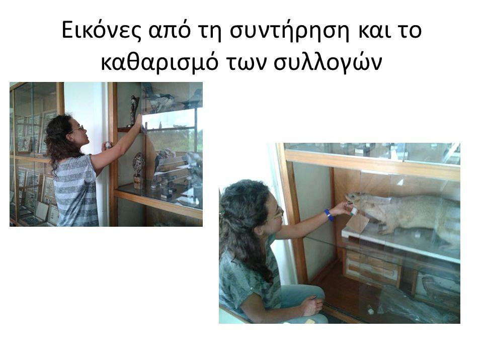 Εικόνες από τη συντήρηση και το καθαρισμό των συλλογών