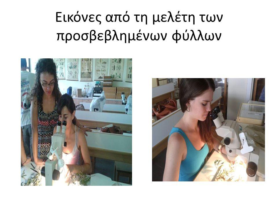Εικόνες από τη μελέτη των προσβεβλημένων φύλλων