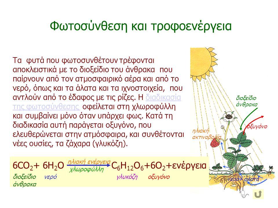 ηλιακή ακτινοβολία διοξείδιο άνθρακα νερό+ άλατα οξυγόνο Τα φυτά που φωτοσυνθέτουν τρέφονται αποκλειστικά με το διοξείδιο του άνθρακα που παίρνουν από