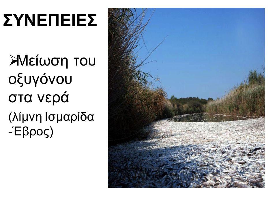 ΣΥΝΕΠΕΙΕΣ  Μείωση του οξυγόνου στα νερά (λίμνη Ισμαρίδα -Έβρος)