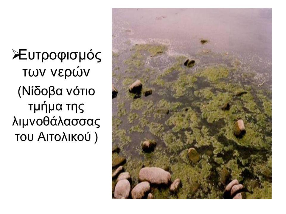  Ευτροφισμός των νερών (Νίδοβα νότιο τμήμα της λιμνοθάλασσας του Αιτολικού )