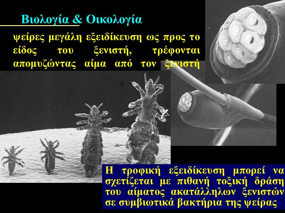 ΑνόπλουραΥπουργείο Αγροτικής Ανάπτυξης & Τροφίμων_htm.htmΥπουργείο Αγροτικής Ανάπτυξης & Τροφίμων_htm.htm Οι ψείρες των κατοικίδιων ζώων καταπολεμούνται  με επιπάσεις,  ψεκασμό ή εμβάπτιση των ζώων σε: διαλύματα εντομοκτόνων με μικρή τοξικότητα για τα θερμόαιμα ζώα.