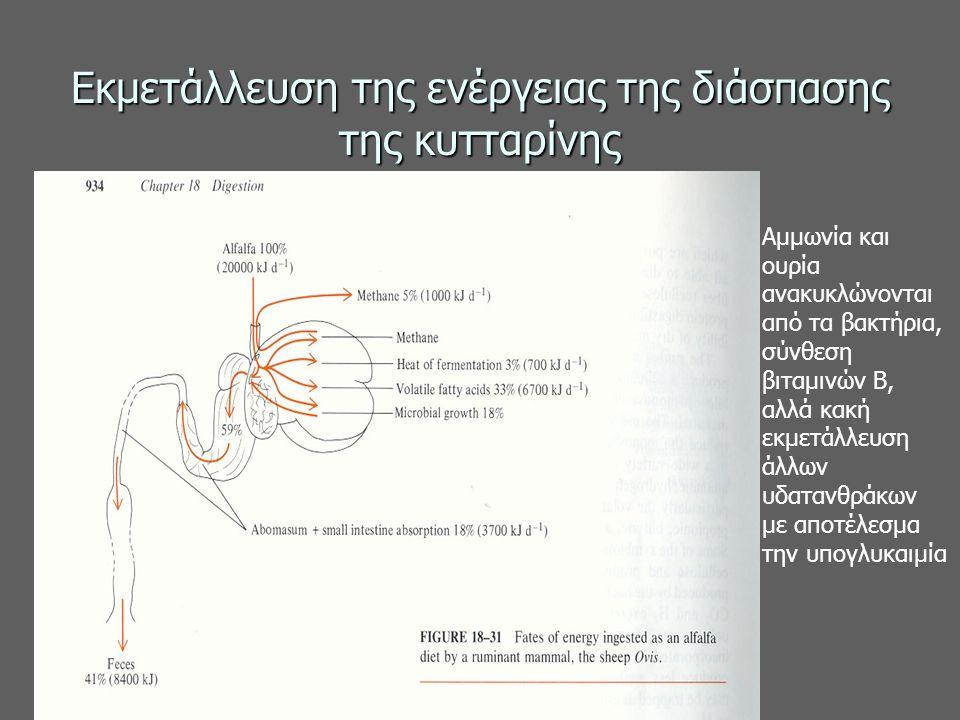 Εκμετάλλευση της ενέργειας της διάσπασης της κυτταρίνης Αμμωνία και ουρία ανακυκλώνονται από τα βακτήρια, σύνθεση βιταμινών Β, αλλά κακή εκμετάλλευση άλλων υδατανθράκων με αποτέλεσμα την υπογλυκαιμία