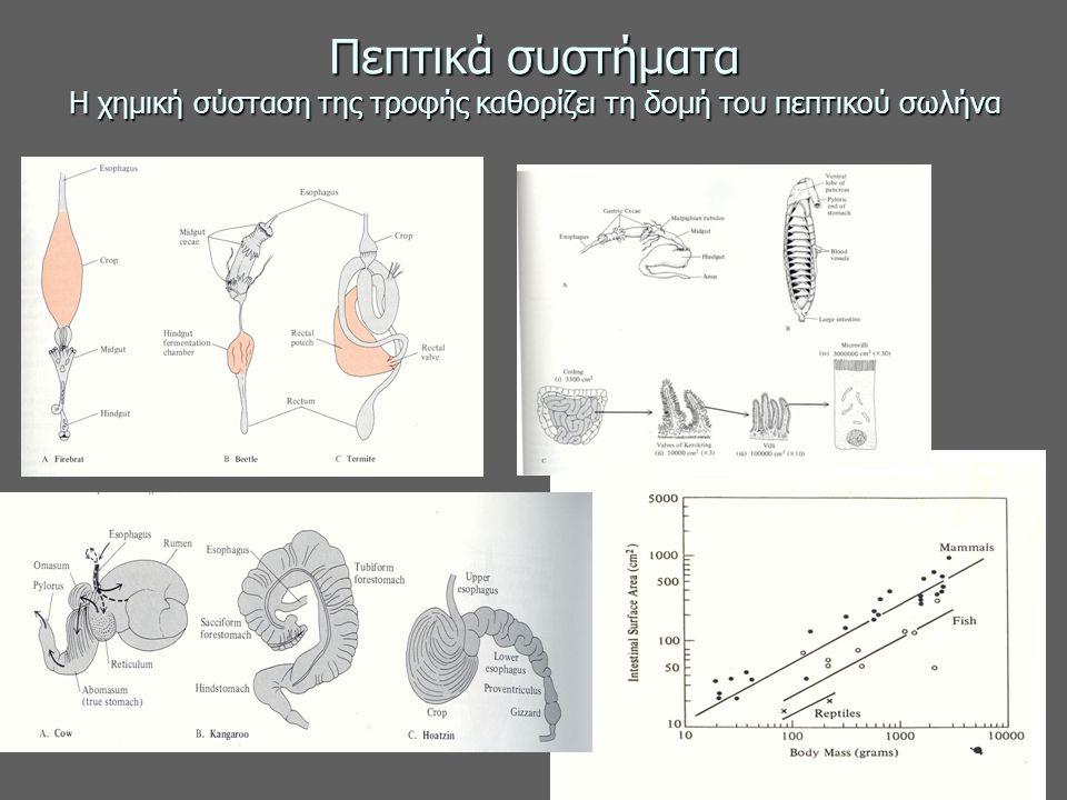 Πεπτικά συστήματα Η χημική σύσταση της τροφής καθορίζει τη δομή του πεπτικού σωλήνα