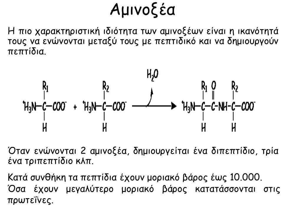 Αμινοξέα Η πιο χαρακτηριστική ιδιότητα των αμινοξέων είναι η ικανότητά τους να ενώνονται μεταξύ τους με πεπτιδικό και να δημιουργούν πεπτίδια.