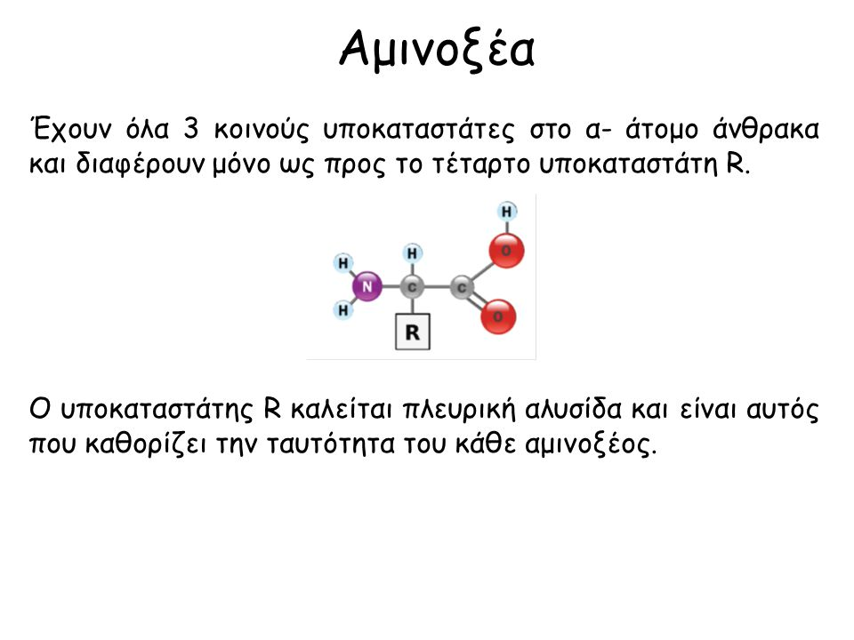 Αμινοξέα Έχουν όλα 3 κοινούς υποκαταστάτες στο α- άτομο άνθρακα και διαφέρουν μόνο ως προς το τέταρτο υποκαταστάτη R.