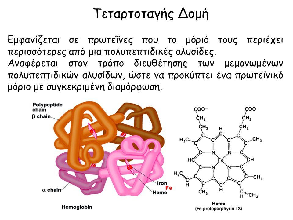 Τεταρτοταγής Δομή Εμφανίζεται σε πρωτεΐνες που το μόριό τους περιέχει περισσότερες από μια πολυπεπτιδικές αλυσίδες.