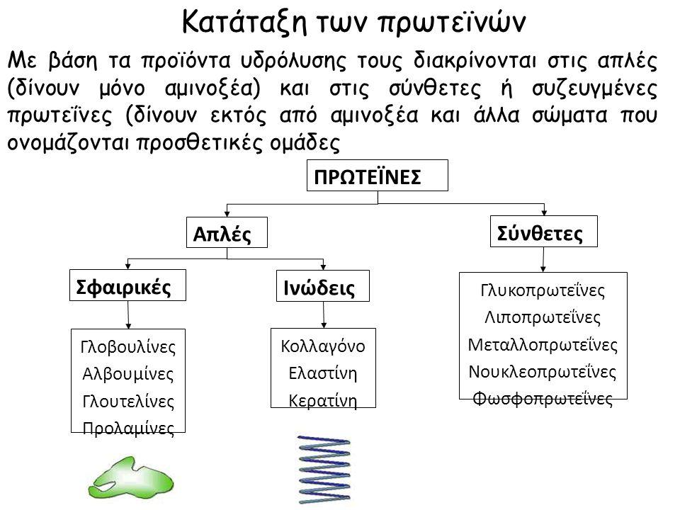 Κατάταξη των πρωτεϊνών Με βάση τα προϊόντα υδρόλυσης τους διακρίνονται στις απλές (δίνουν μόνο αμινοξέα) και στις σύνθετες ή συζευγμένες πρωτεΐνες (δίνουν εκτός από αμινοξέα και άλλα σώματα που ονομάζονται προσθετικές ομάδες ΠΡΩΤΕΪΝΕΣ Απλές Σύνθετες Σφαιρικές Ινώδεις Γλοβουλίνες Αλβουμίνες Γλουτελίνες Προλαμίνες Κολλαγόνο Ελαστίνη Κερατίνη Γλυκοπρωτεΐνες Λιποπρωτεΐνες Μεταλλοπρωτεΐνες Νουκλεοπρωτεΐνες Φωσφοπρωτεΐνες
