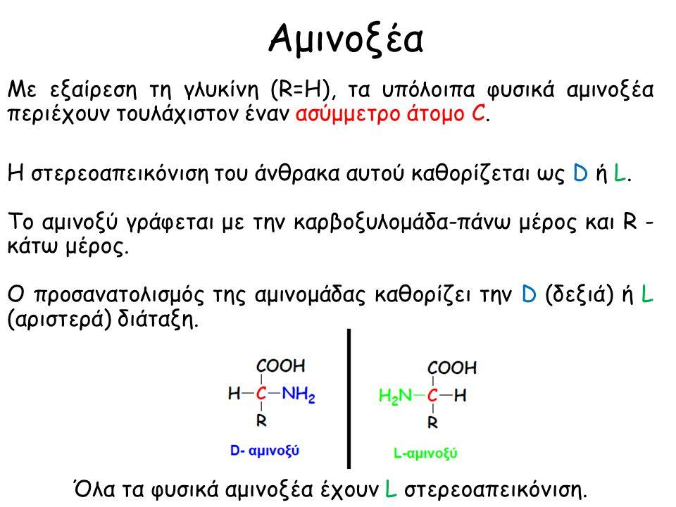 Αμινοξέα Τα αμινοξέα κατατάσσονται σε υδροξυ, βασικά και όξινα, ανάλογα με την υποκατάσταση R της πλευρικής αλυσίδας (ΟΗ, ΝΗ 2 ή COOH).