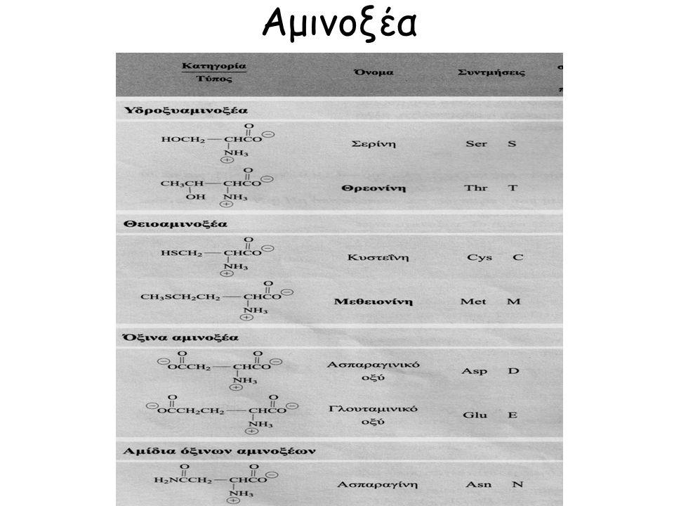 Δευτεροταγής Δομή Δίνει τον τρόπο με τον οποίο η πρωτεϊνική αλυσίδα (πρωτοταγής δομή) αναδιπλώνεται έτσι ώστε η πρωτεΐνη να έχει τη μεγαλύτερη σταθερότητα (δομή ελάχιστης ενέργειας).