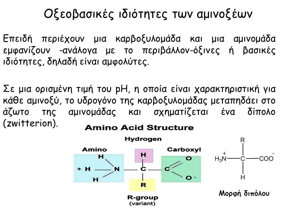 Οξεοβασικές ιδιότητες των αμινοξέων Επειδή περιέχουν μια καρβοξυλομάδα και μια αμινομάδα εμφανίζουν -ανάλογα με το περιβάλλον-όξινες ή βασικές ιδιότητες, δηλαδή είναι αμφολύτες.
