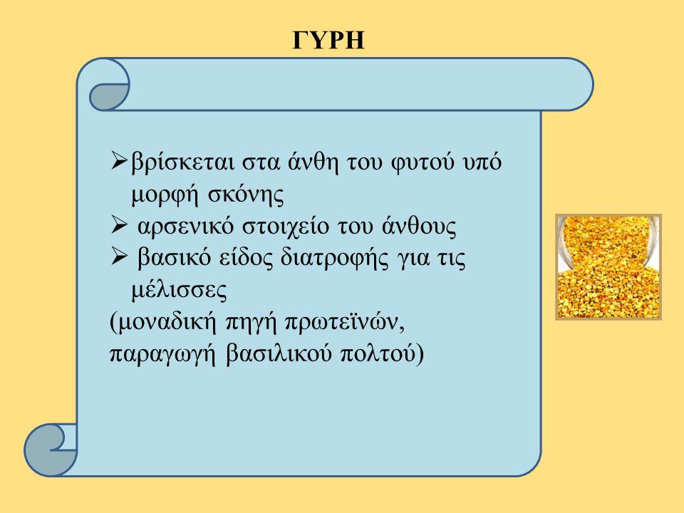 ΓΥΡΗ  βρίσκεται στα άνθη του φυτού υπό μορφή σκόνης  αρσενικό στοιχείο του άνθους  βασικό είδος διατροφής για τις μέλισσες (μοναδική πηγή πρωτεϊνών, παραγωγή βασιλικού πολτού)