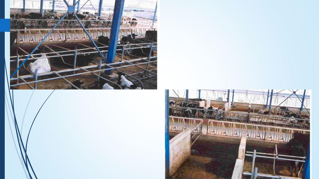 Κατηγορίες Αποβλήτων (από πλευράς ρευστότητας) 1 ΣΤΕΡΕΑ -Κοπριά αιγοπροβάτων και ορνίθων κρεοπαραγωγής -Κοπριά βουστασίων και χοιροστασίων αναμεμειγμένη με στρωμνή -Στερεά μηχανικού διαχωρισμού υγρών αποβλήτων χοιροστασίων και βουστασίων ΗΜΙΣΤΕΡΕΑ -Τα νωπά στερεά απόβλητα των βουστασίων -Απόβλητα στερεής μορφής μετά από διαβροχή τους με νερό (π.χ.