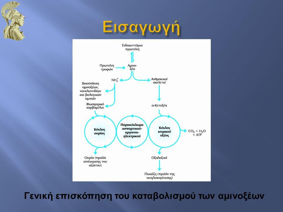 Γενική επισκόπηση του καταβολισμού των αμινοξέων