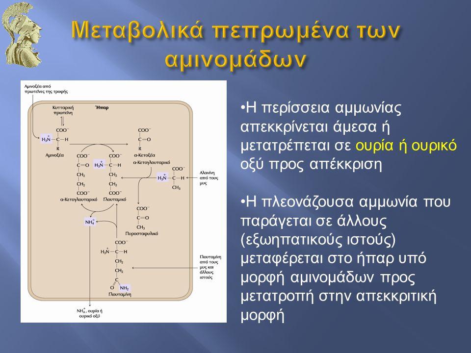 Η περίσσεια αμμωνίας απεκκρίνεται άμεσα ή μετατρέπεται σε ουρία ή ουρικό οξύ προς απέκκριση Η πλεονάζουσα αμμωνία που παράγεται σε άλλους (εξωηπατικού