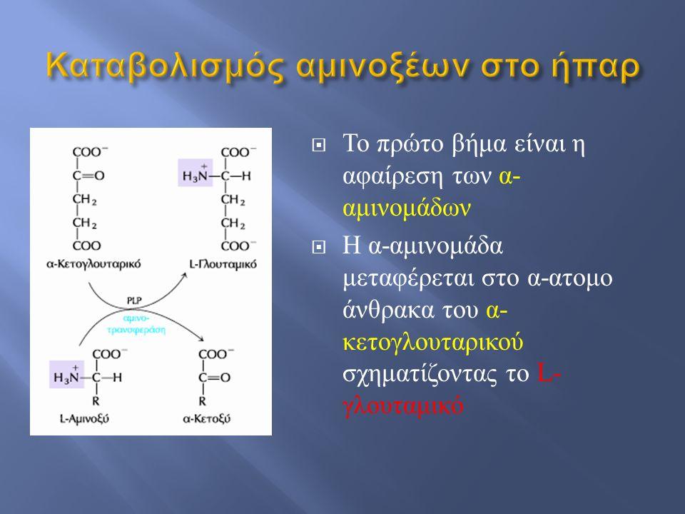  Το πρώτο βήμα είναι η αφαίρεση των α - αμινομάδων  Η α - αμινομάδα μεταφέρεται στο α - ατομο άνθρακα του α - κετογλουταρικού σχηματίζοντας το L- γλ