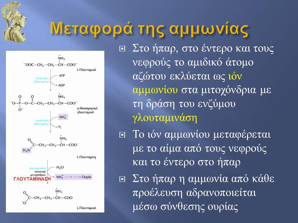  Στο ήπαρ, στο έντερο και τους νεφρούς το αμιδικό άτομο αζώτου εκλύεται ως ιόν αμμωνίου στα μιτοχόνδρια με τη δράση του ενζύμου γλουταμινάση  Το ιόν