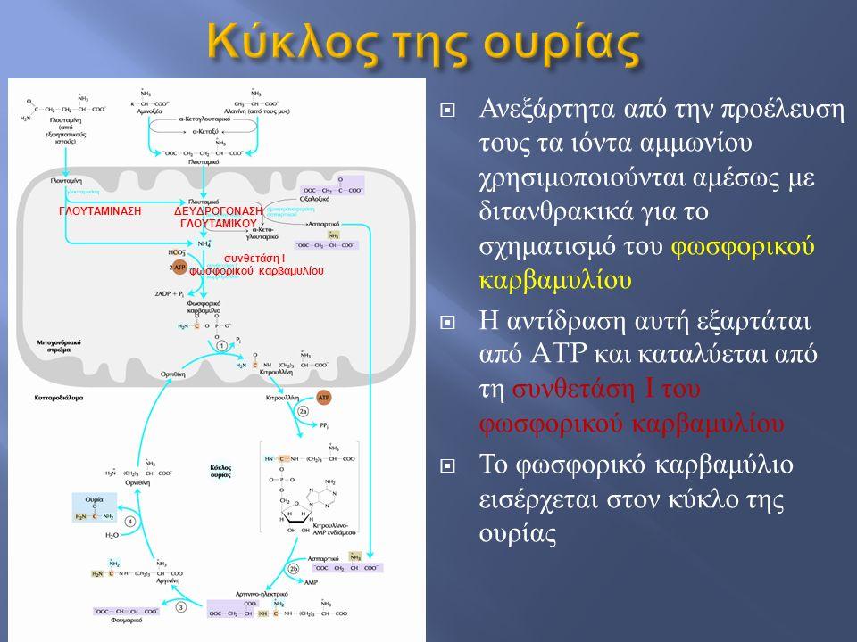  Ανεξάρτητα από την προέλευση τους τα ιόντα αμμωνίου χρησιμοποιούνται αμέσως με διτανθρακικά για το σχηματισμό του φωσφορικού καρβαμυλίου  Η αντίδρα