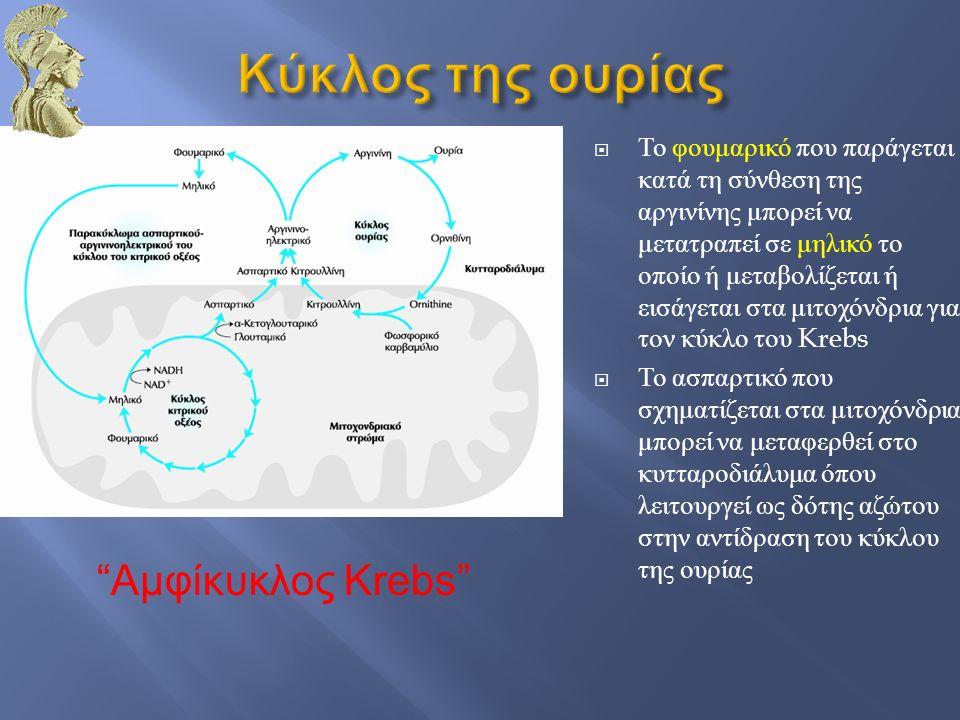  Το φουμαρικό που παράγεται κατά τη σύνθεση της αργινίνης μπορεί να μετατραπεί σε μηλικό το οποίο ή μεταβολίζεται ή εισάγεται στα μιτοχόνδρια για τον