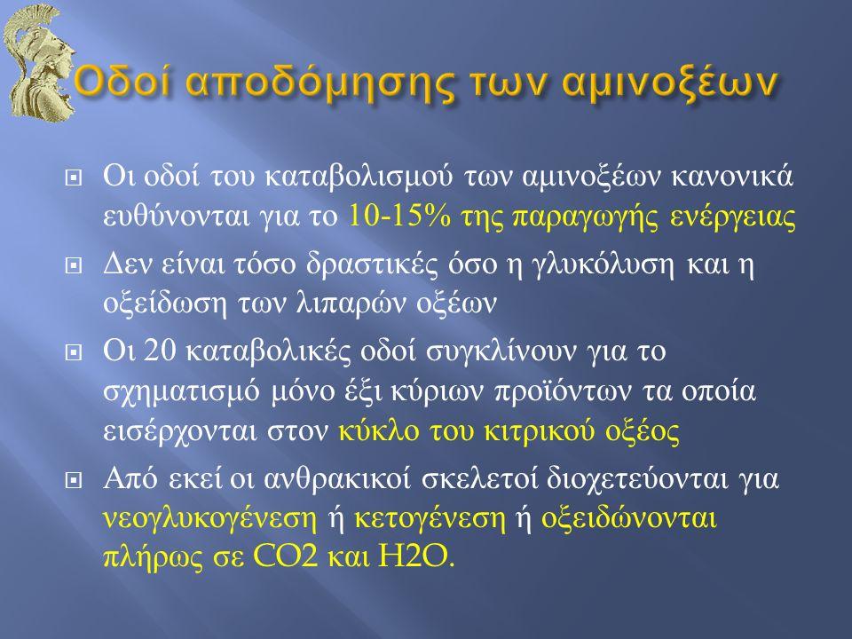  Οι οδοί του καταβολισμού των αμινοξέων κανονικά ευθύνονται για το 10-15% της παραγωγής ενέργειας  Δεν είναι τόσο δραστικές όσο η γλυκόλυση και η οξ