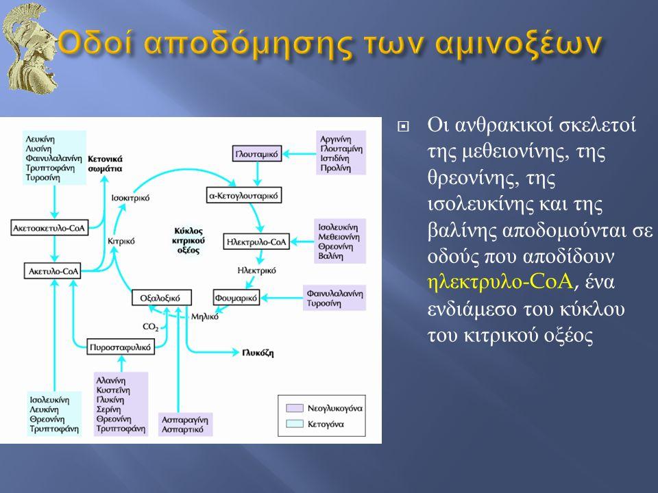  Οι ανθρακικοί σκελετοί της μεθειονίνης, της θρεονίνης, της ισολευκίνης και της βαλίνης αποδομούνται σε οδούς που αποδίδουν ηλεκτρυλο -CoA, ένα ενδιά