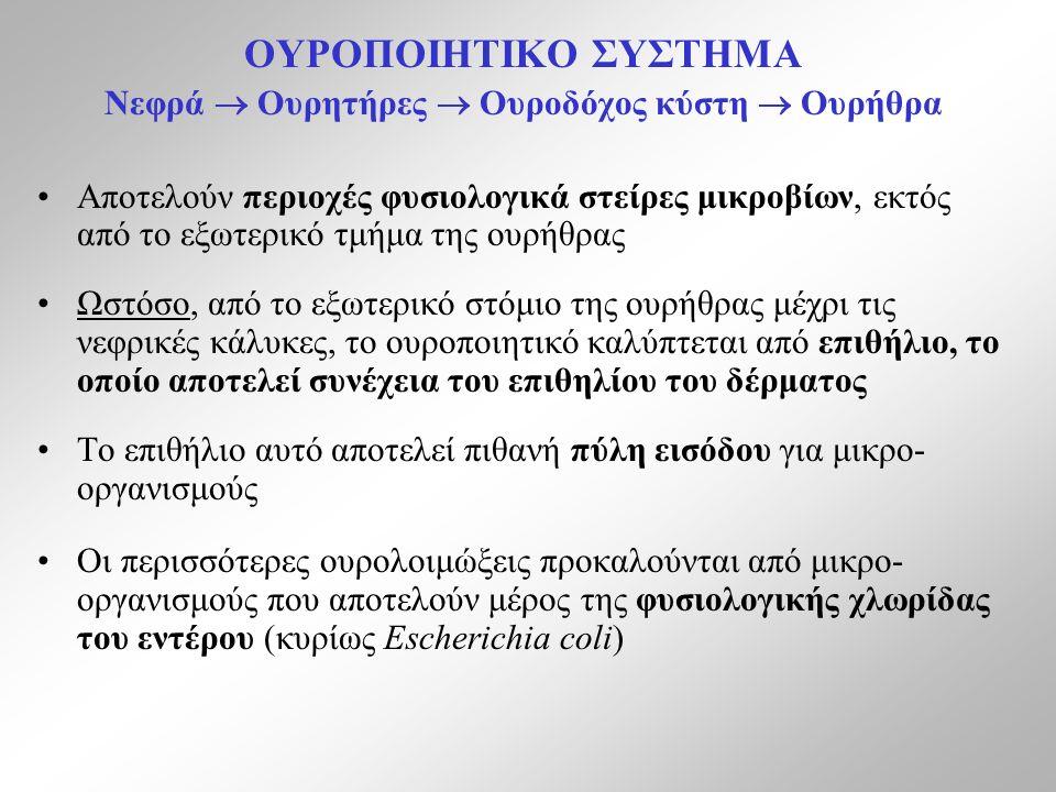 ΟΥΡΟΠΟΙΗΤΙΚΟ ΣΥΣΤΗΜΑ Νεφρά  Ουρητήρες  Ουροδόχος κύστη  Ουρήθρα Αποτελούν περιοχές φυσιολογικά στείρες μικροβίων, εκτός από το εξωτερικό τμήμα της ουρήθρας Ωστόσο, από το εξωτερικό στόμιο της ουρήθρας μέχρι τις νεφρικές κάλυκες, το ουροποιητικό καλύπτεται από επιθήλιο, το οποίο αποτελεί συνέχεια του επιθηλίου του δέρματος Το επιθήλιο αυτό αποτελεί πιθανή πύλη εισόδου για μικρο- οργανισμούς Οι περισσότερες ουρολοιμώξεις προκαλούνται από μικρο- οργανισμούς που αποτελούν μέρος της φυσιολογικής χλωρίδας του εντέρου (κυρίως Escherichia coli)