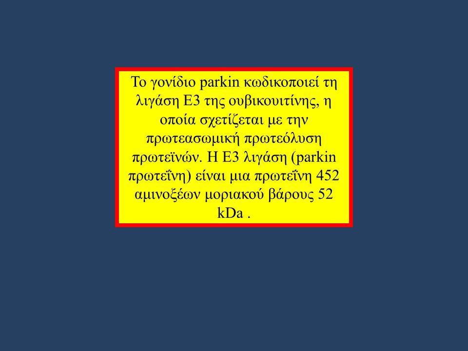 Το γονίδιο parkin κωδικοποιεί τη λιγάση Ε3 της ουβικουιτίνης, η οποία σχετίζεται με την πρωτεασωμική πρωτεόλυση πρωτεϊνών.