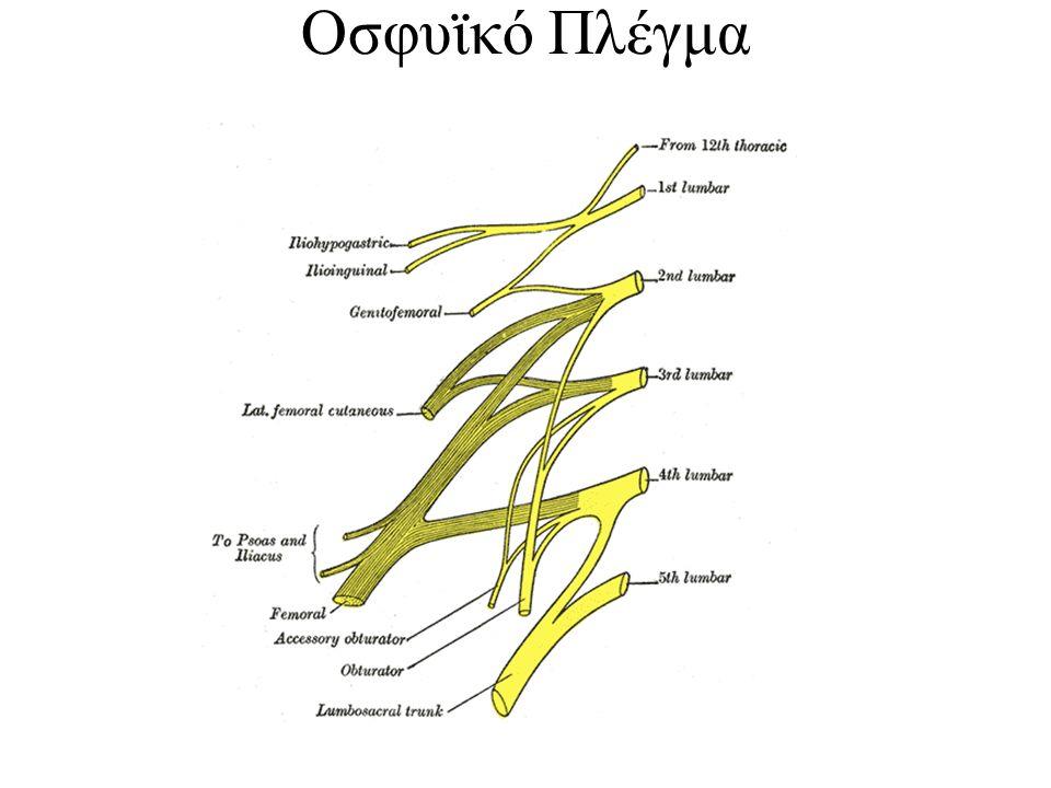Οσφυϊκό Πλέγμα