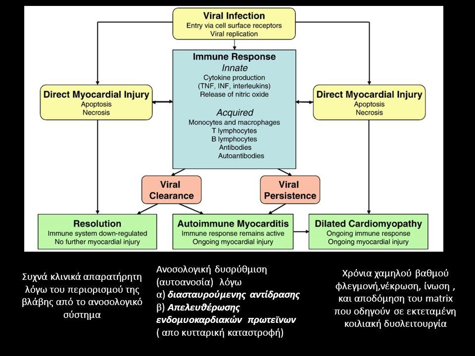 Συχνά κλινικά απαρατήρητη λόγω του περιορισμού της βλάβης από το ανοσολογικό σύστημα Ανοσολογική δυσρύθμιση (αυτοανοσία) λόγω α) διασταυρούμενης αντίδρασης β) Απελευθέρωσης ενδομυοκαρδιακών πρωτεϊνων ( απο κυτταρική καταστροφή) Χρόνια χαμηλού βαθμού φλεγμονή,νέκρωση, ίνωση, και αποδόμηση του matrix που οδηγούν σε εκτεταμένη κοιλιακή δυσλειτουργία