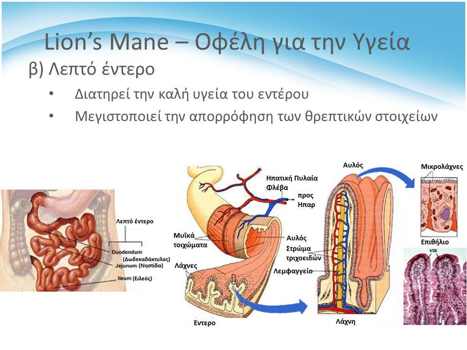 β) Λεπτό έντερο Διατηρεί την καλή υγεία του εντέρου Μεγιστοποιεί την απορρόφηση των θρεπτικών στοιχείων Lion's Mane – Οφέλη για την Υγεία