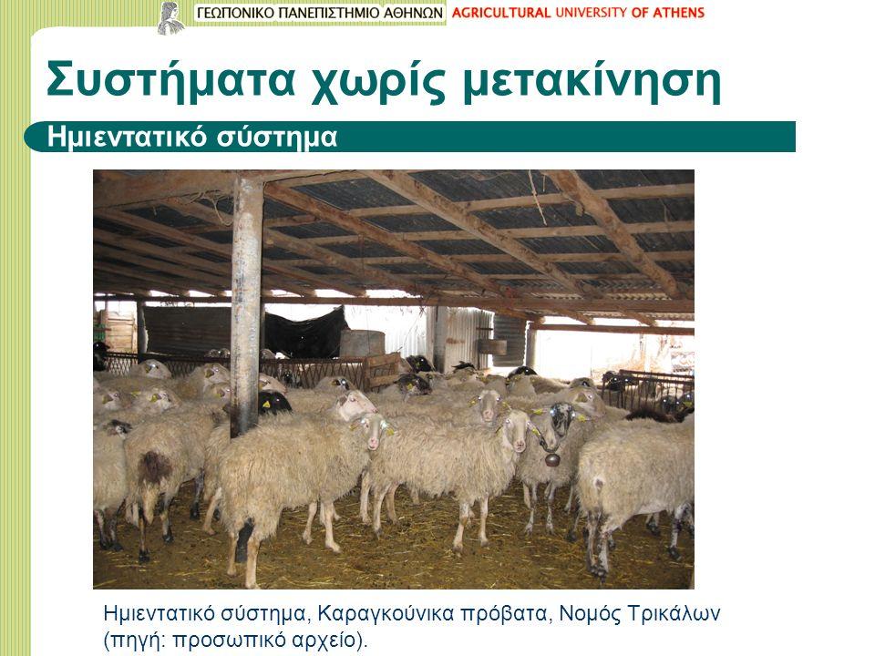 Συστήματα χωρίς μετακίνηση Ημιεντατικό σύστημα Ημιεντατικό σύστημα, Καραγκούνικα πρόβατα, Νομός Τρικάλων (πηγή: προσωπικό αρχείο).