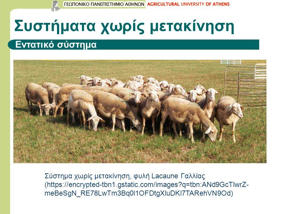 Σύστημα χωρίς μετακίνηση, φυλή Lacaune Γαλλίας (https://encrypted-tbn1.gstatic.com/images?q=tbn:ANd9GcTlwrZ- meBeSgN_RE78LwTm3Bq0l1OFDtgXluDKl7TARehVN9Od) Συστήματα χωρίς μετακίνηση Εντατικό σύστημα
