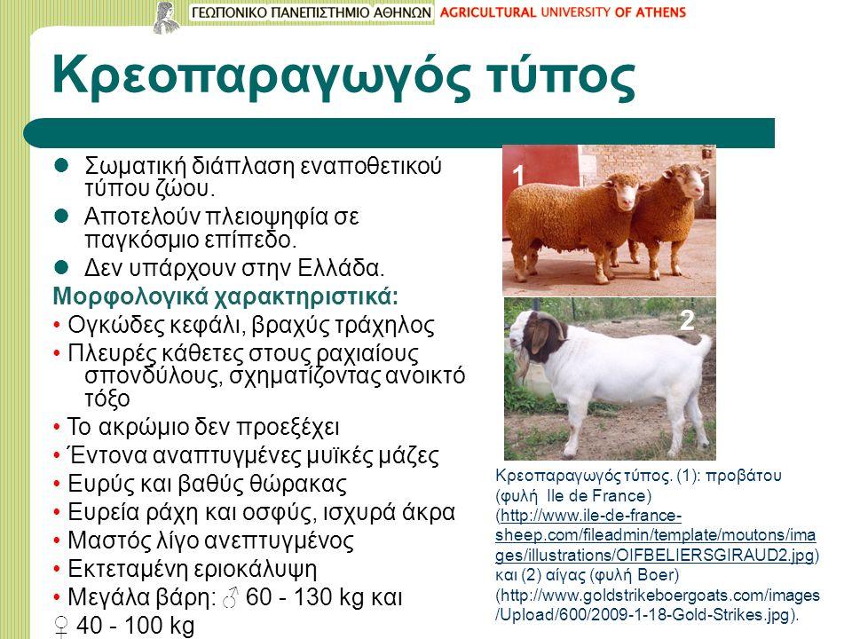 Κρεοπαραγωγός τύπος Σωματική διάπλαση εναποθετικού τύπου ζώου. Αποτελούν πλειοψηφία σε παγκόσμιο επίπεδο. Δεν υπάρχουν στην Ελλάδα. Μορφολογικά χαρακτ
