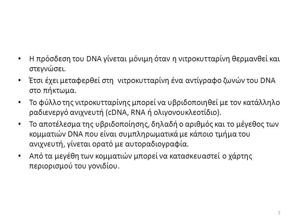 Η πρόσδεση του DNA γίνεται μόνιμη όταν η νιτροκυτταρίνη θερμανθεί και στεγνώσει.