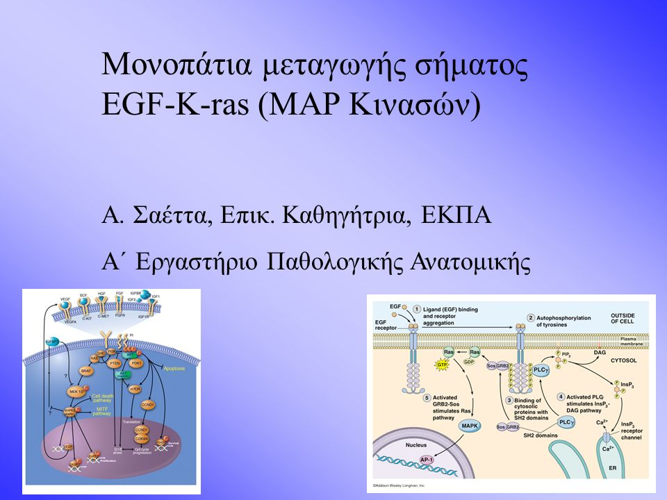 Μονοπάτια μεταγωγής σήματος EGF-K-ras (ΜΑP Κινασών) Α.