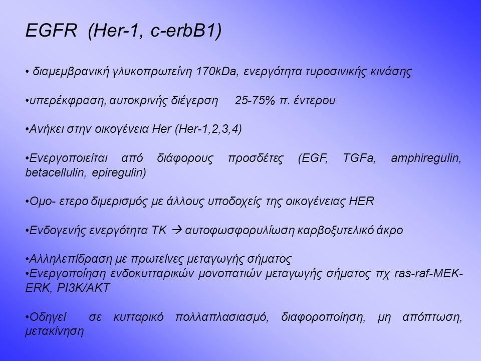 EGFR (Her-1, c-erbB1) διαμεμβρανική γλυκοπρωτείνη 170kDa, ενεργότητα τυροσινικής κινάσης υπερέκφραση, αυτοκρινής διέγερση 25-75% π.