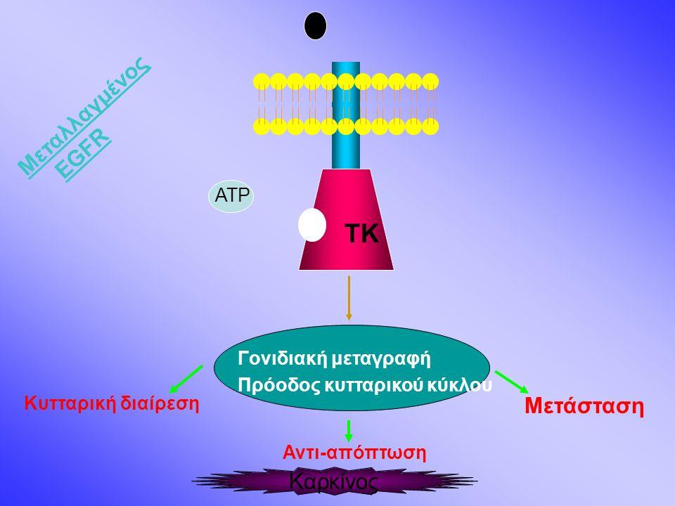 TK Γονιδιακή μεταγραφή Πρόοδος κυτταρικού κύκλου Κυτταρική διαίρεση Μετάσταση Αντι-απόπτωση Καρκίνος ATP Μεταλλαγμένος ΕGFR