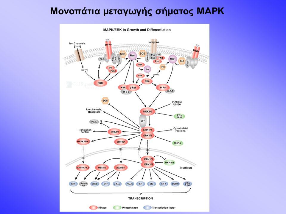 Μονοπάτια μεταγωγής σήματος MAPK