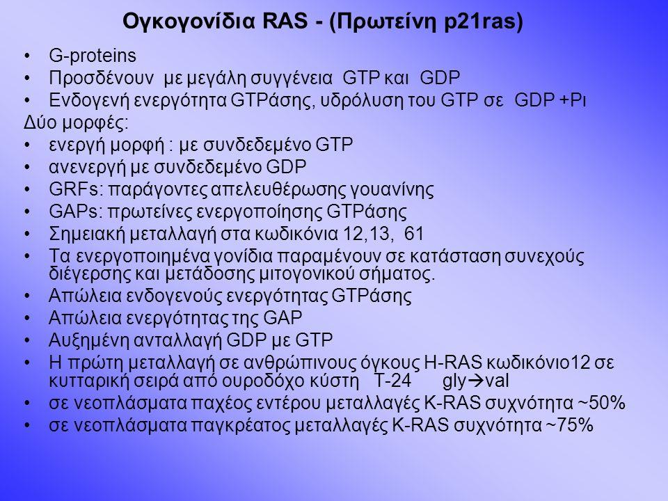 Ογκογονίδια RAS - (Πρωτείνη p21ras) G-proteins Προσδένουν με μεγάλη συγγένεια GTP και GDP Ενδογενή ενεργότητα GTPάσης, υδρόλυση του GTP σε GDP +Pι Δύο μορφές: ενεργή μορφή : με συνδεδεμένο GTP ανενεργή με συνδεδεμένο GDP GRFs: παράγοντες απελευθέρωσης γουανίνης GAPs: πρωτείνες ενεργοποίησης GTPάσης Σημειακή μεταλλαγή στα κωδικόνια 12,13, 61 Τα ενεργοποιημένα γονίδια παραμένουν σε κατάσταση συνεχούς διέγερσης και μετάδοσης μιτογονικού σήματος.