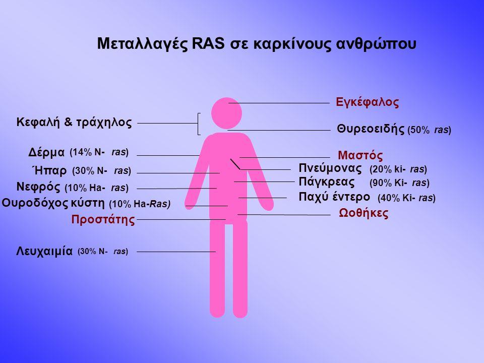 Μεταλλαγές RAS σε καρκίνους ανθρώπου Πνεύμονας (20% ki-ras) Μαστός Εγκέφαλος Παχύ έντερο (40% Ki-ras) Ωοθήκες Προστάτης Πάγκρεας (90% Ki-ras) Ουροδόχος κύστη (10% Ha-Ras) Θυρεοειδής (50%ras) Ήπαρ (30% N-ras) Δέρμα (14% N-ras) Κεφαλή & τράχηλος Λευχαιμία (30% N-ras) Νεφρός (10% Ha-ras)