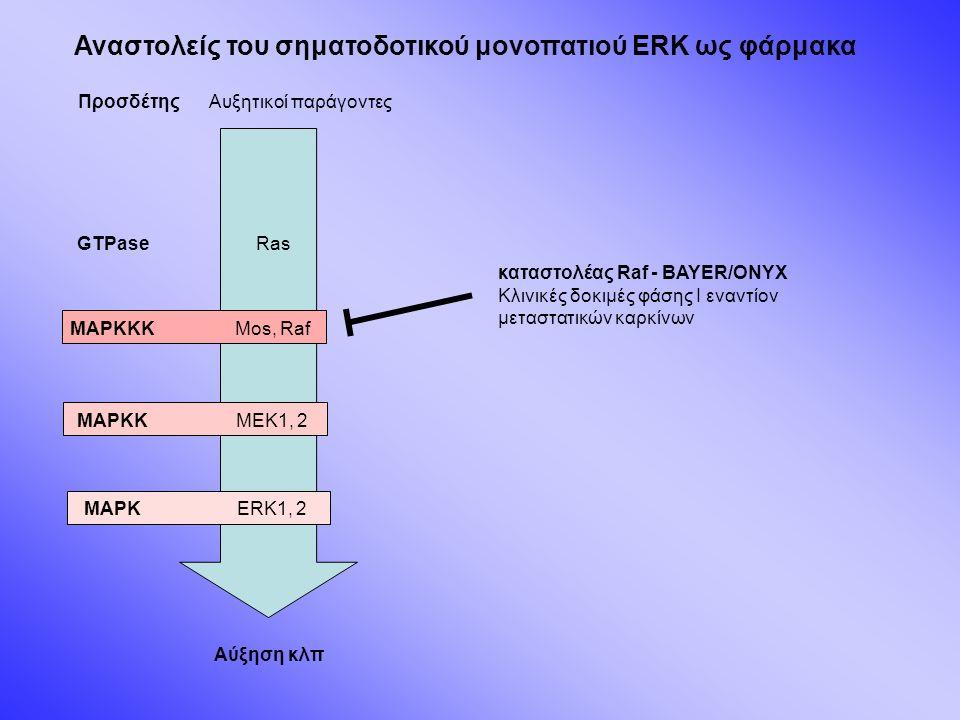 Προσδέτης GTPase MAPKKK MAPKK MAPK Αυξητικοί παράγοντες Ras Mos, Raf MEK1, 2 ERK1, 2 Αύξηση κλπ καταστολέας Raf - BAYER/ONYX Κλινικές δοκιμές φάσης Ι εναντίον μεταστατικών καρκίνων Αναστολείς του σηματοδοτικού μονοπατιού ERK ως φάρμακα