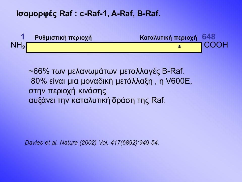 1648 Ισομορφές Raf : c-Raf-1, A-Raf, B-Raf. ~66% των μελανωμάτων μεταλλαγές B-Raf.