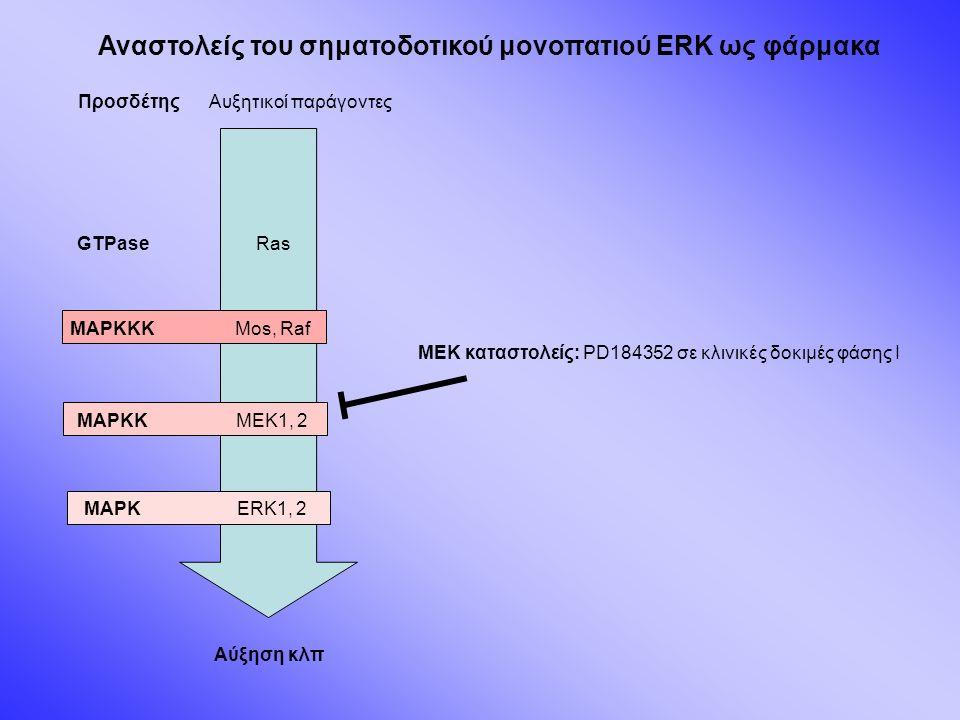 Αναστολείς του σηματοδοτικού μονοπατιού ERK ως φάρμακα Προσδέτης GTPase MAPKKK MAPKK MAPK Αυξητικοί παράγοντες Ras Mos, Raf MEK1, 2 ERK1, 2 Αύξηση κλπ MEK καταστολείς: PD184352 σε κλινικές δοκιμές φάσης Ι
