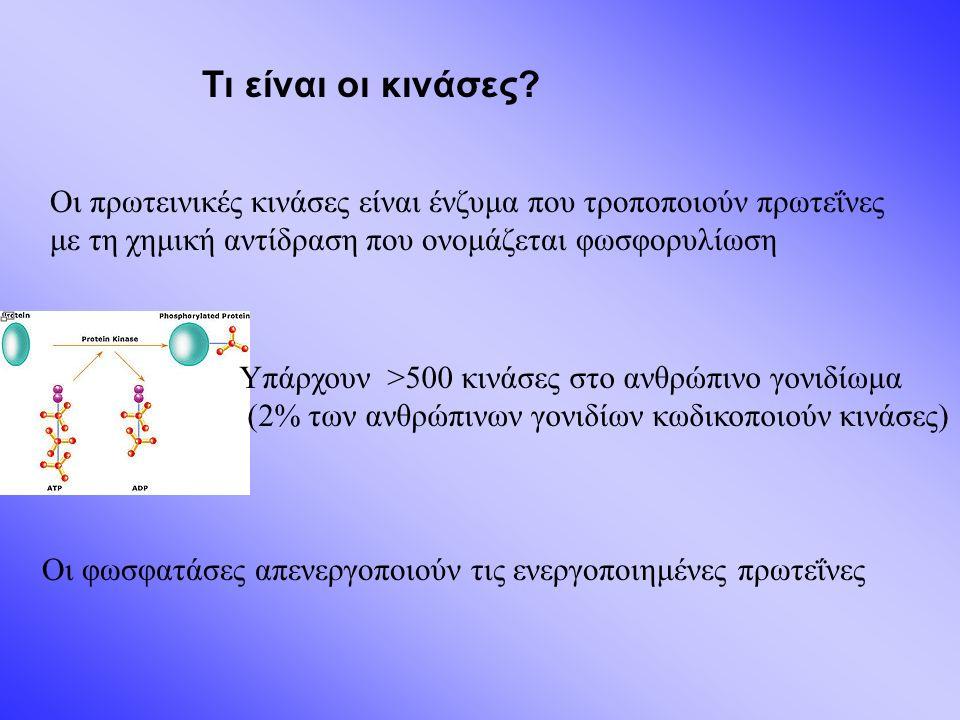 Οι πρωτεινικές κινάσες είναι ένζυμα που τροποποιούν πρωτεΐνες με τη χημική αντίδραση που ονομάζεται φωσφορυλίωση Τι είναι οι κινάσες.