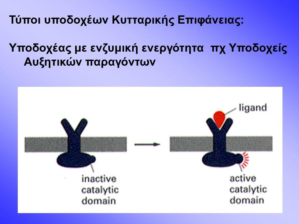 Ενεργοποίηση υποδοχέα με ενζυμική ενεργότητα πχ Υποδοχέας EGFR (RTK) Πρόσδεση του αυξητικού παράγοντα  διμερισμός υποδοχέα  αυτοφωσφορυλίωση υποδοχέα (ενδογενής ενεργότητα κινάσης τυροσίνης)