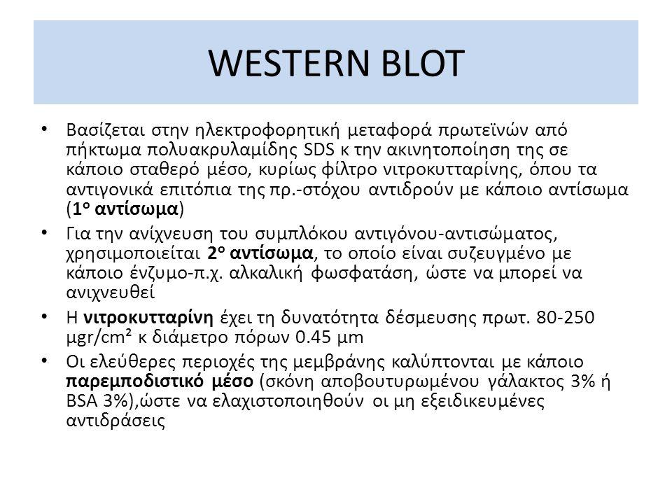 WESTERN BLOT Βασίζεται στην ηλεκτροφορητική μεταφορά πρωτεϊνών από πήκτωμα πολυακρυλαμίδης SDS κ την ακινητοποίηση της σε κάποιο σταθερό μέσο, κυρίως φίλτρο νιτροκυτταρίνης, όπου τα αντιγονικά επιτόπια της πρ.-στόχου αντιδρούν με κάποιο αντίσωμα (1 ο αντίσωμα) Για την ανίχνευση του συμπλόκου αντιγόνου-αντισώματος, χρησιμοποιείται 2 ο αντίσωμα, το οποίο είναι συζευγμένο με κάποιο ένζυμο-π.χ.