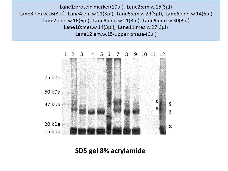 15 kDa 20 kDa 37 kDa 50 kDa 75 kDa α β γ δ ε 123456789101112 Lane1:protein marker(10μl), Lane2:em.w.15(3μl) Lane3:em.w.16(3μl), Lane4:em.w.21(3μl), Lane5:em.w.29(3μl), Lane6:end.w.14(6μl), Lane7:end.w.16(6μl), Lane8:end.w.21(3μl), Lane9:end.w.30(3μl) Lane10:mes.w.14(3μl), Lane11:mes.w.27(3μl) Lane12:em.w.15-upper phase-(6μl) SDS gel 8% acrylamide