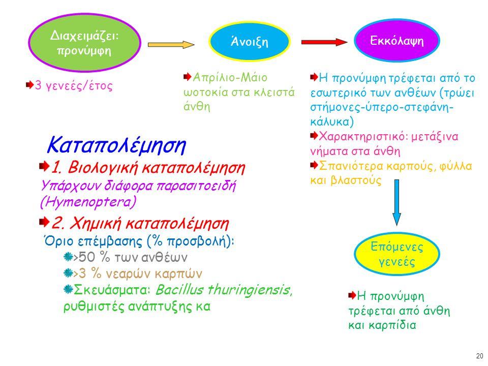 Διαχειμάζει: προνύμφη Άνοιξη 3 γενεές/έτος Απρίλιο-Μάιο ωοτοκία στα κλειστά άνθη Εκκόλαψη Η προνύμφη τρέφεται από το εσωτερικό των ανθέων (τρώει στήμονες-ύπερο-στεφάνη- κάλυκα) Χαρακτηριστικό: μετάξινα νήματα στα άνθη Σπανιότερα καρπούς, φύλλα και βλαστούς Επόμενες γενεές Η προνύμφη τρέφεται από άνθη και καρπίδια Καταπολέμηση 1.