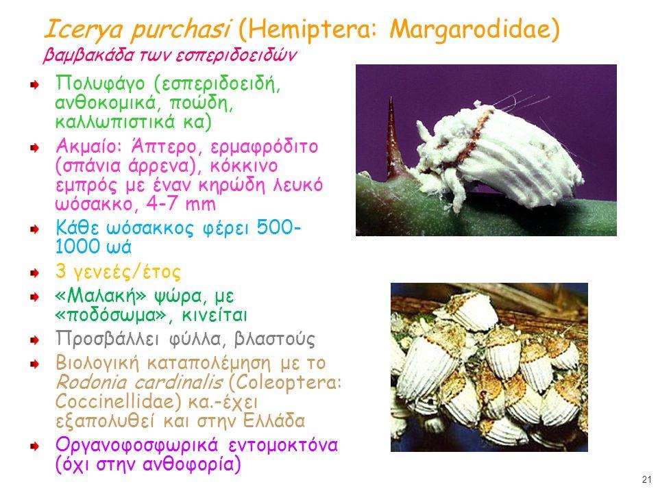 Icerya purchasi (Hemiptera: Margarodidae) βαμβακάδα των εσπεριδοειδών Πολυφάγο (εσπεριδοειδή, ανθοκομικά, ποώδη, καλλωπιστικά κα) Ακμαίο: Άπτερο, ερμαφρόδιτο (σπάνια άρρενα), κόκκινο εμπρός με έναν κηρώδη λευκό ωόσακκο, 4-7 mm Κάθε ωόσακκος φέρει 500- 1000 ωά 3 γενεές/έτος «Μαλακή» ψώρα, με «ποδόσωμα», κινείται Προσβάλλει φύλλα, βλαστούς Βιολογική καταπολέμηση με το Rodonia cardinalis (Coleoptera: Coccinellidae) κα.-έχει εξαπολυθεί και στην Ελλάδα Οργανοφοσφωρικά εντομοκτόνα (όχι στην ανθοφορία) 21